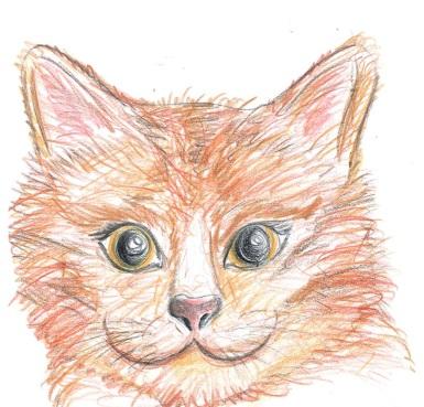 gatto rosso muso
