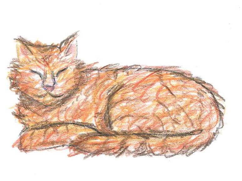Gattone rosso fiabe in costruzione for Disegno gatto facile
