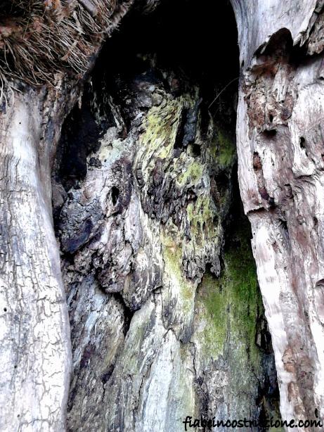 Lo spirito del bosco